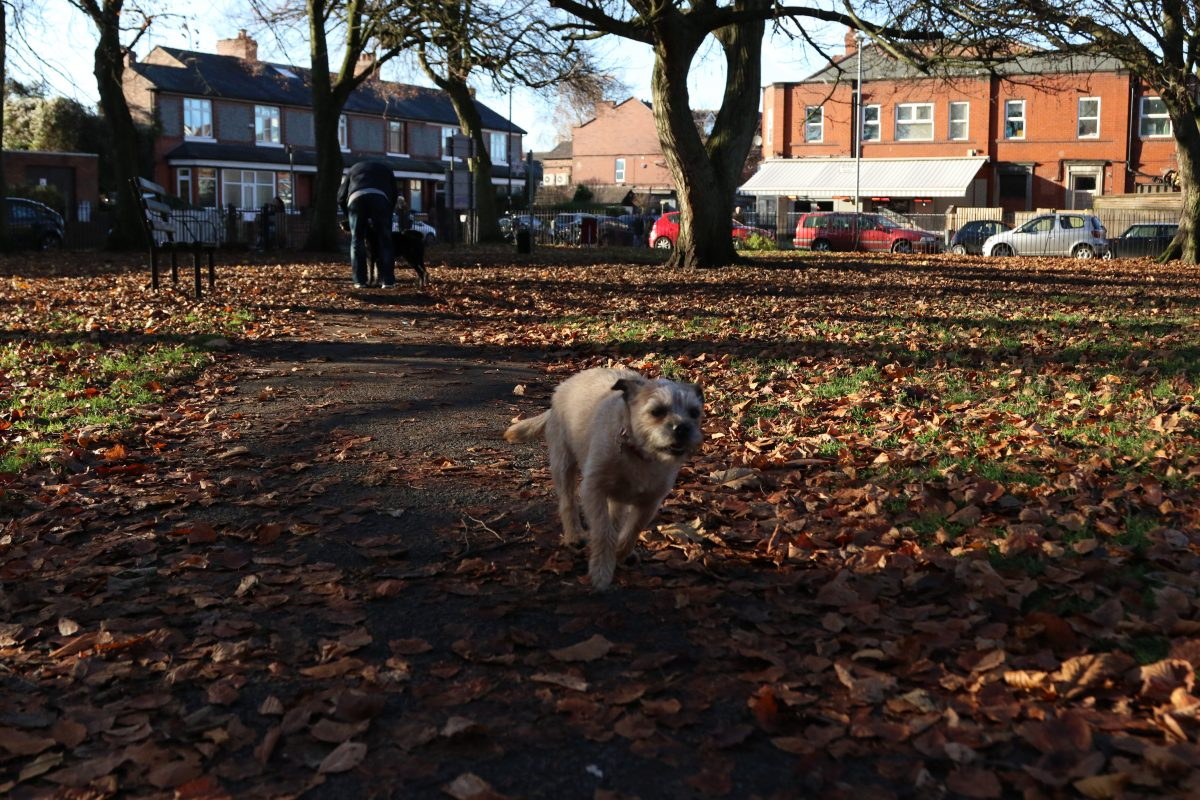 A dog plays in Beech Road Park