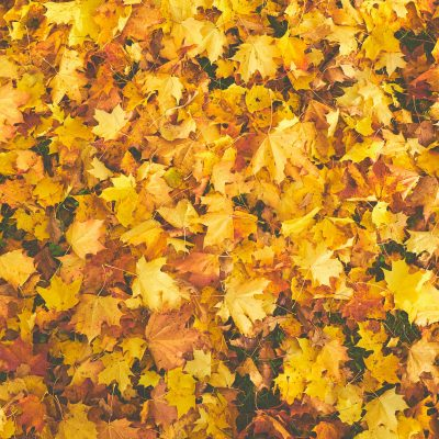 Closeup of autumn leaves lying on the ground