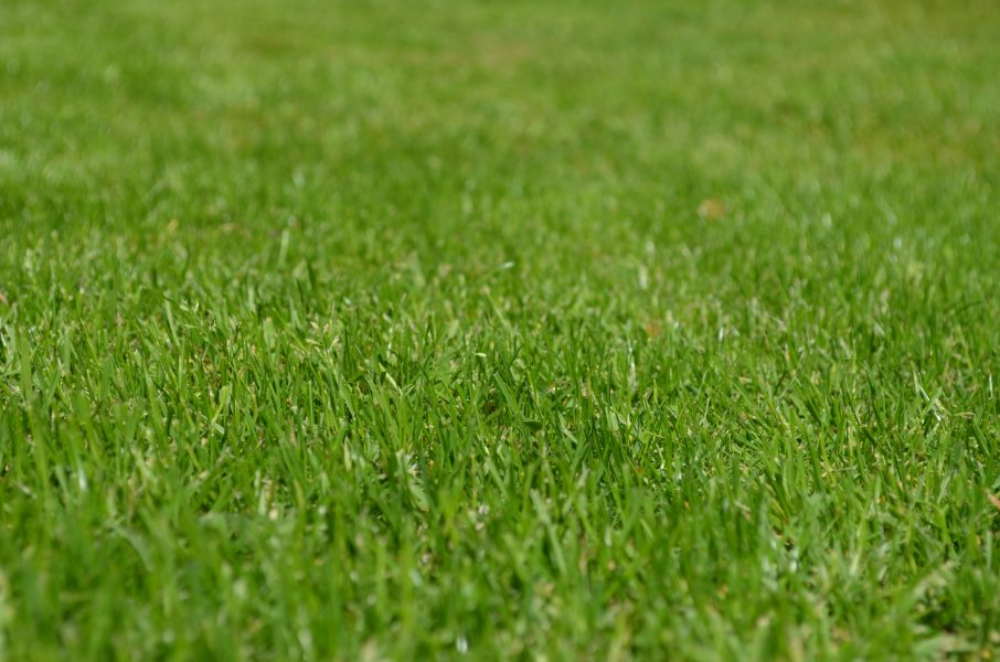 Closeup image of a patch of grass
