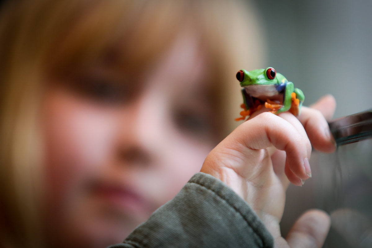 A tiny green frog perches on a young child's hand.