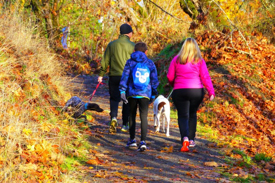 A family walk two dogs through woodland.