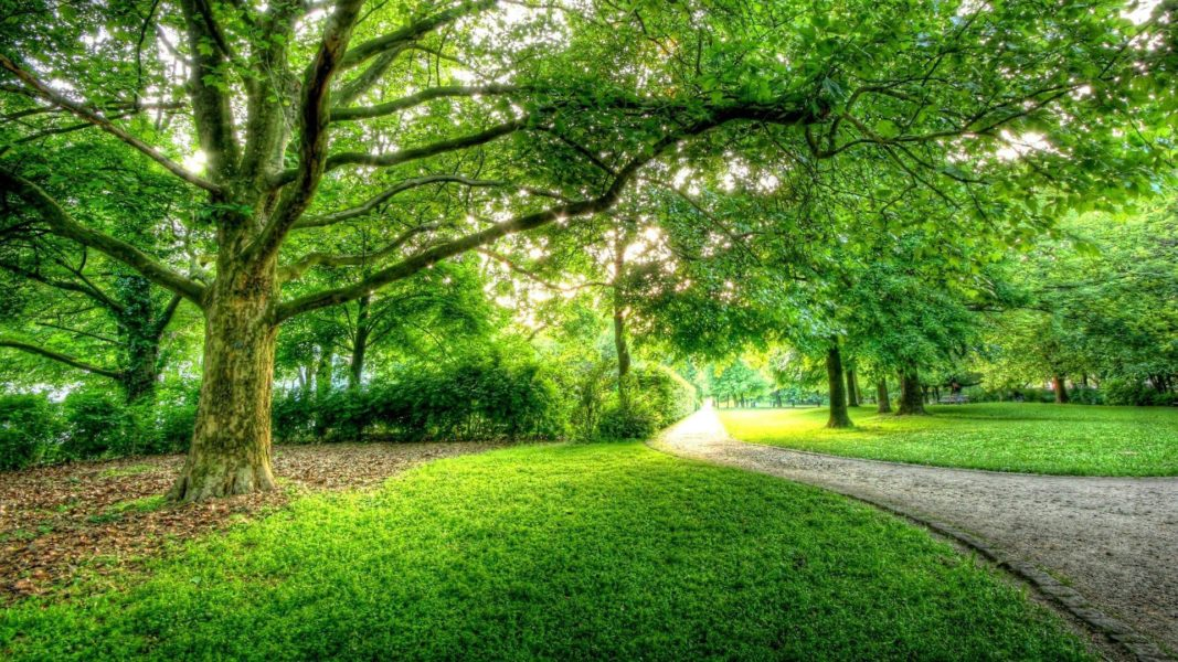 A wonderfully green park with a pathway.