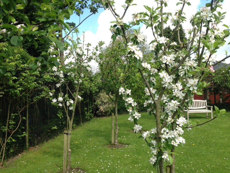 Trees bloom with flowers at Mirfield Community Gardens.