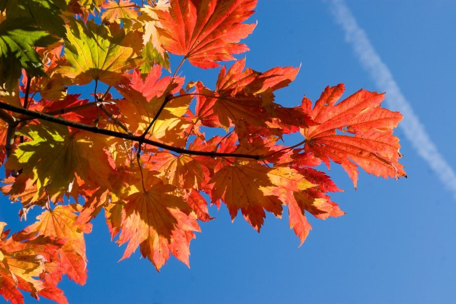 Some red tree leaves sit against a blue sky.