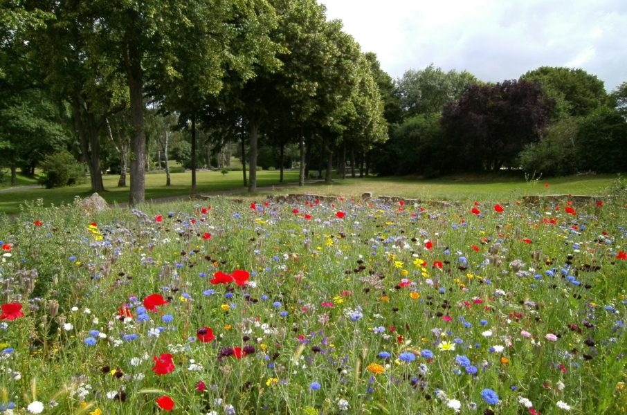 A grassy field blooms with a selection of colourful wild flowers.